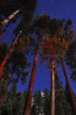 long exposure experiment. 2 minutes, Lower Pines campground - with added headlights